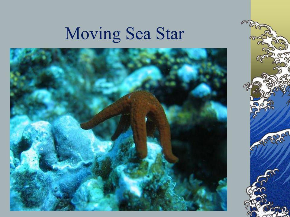 Moving Sea Star