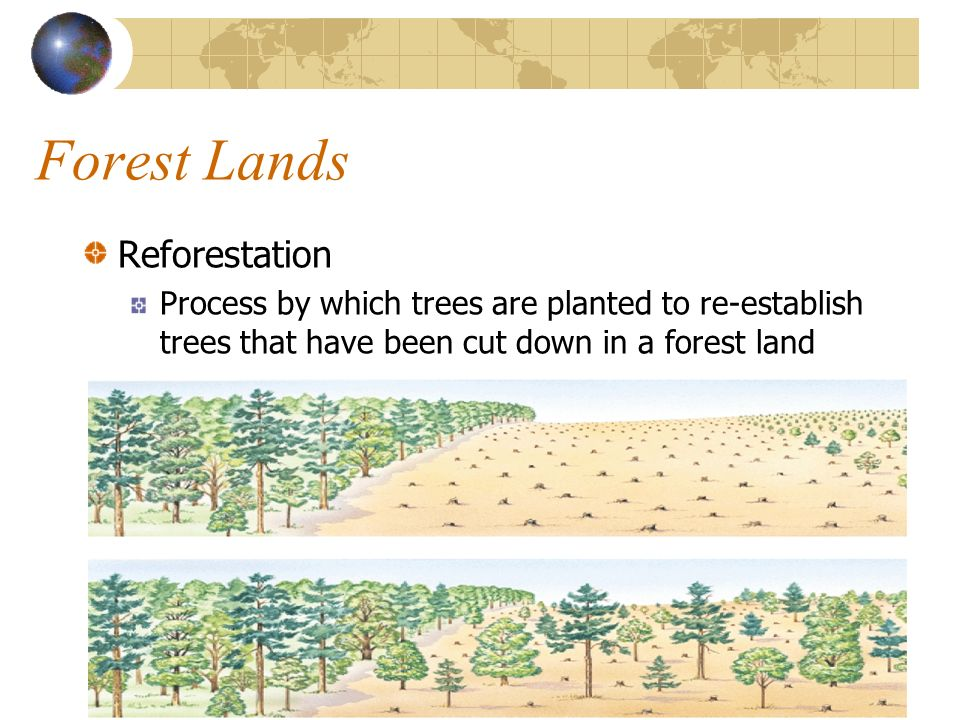 Forest Lands Reforestation Process by which trees are planted to re-establish trees that have been cut down in a forest land