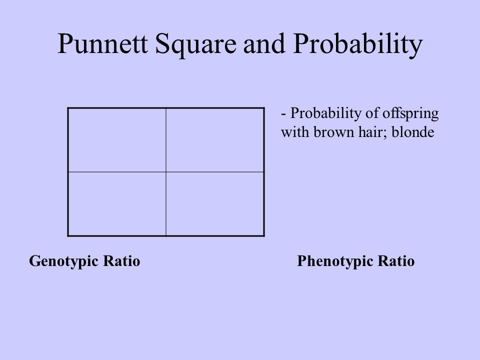 Punnett Square and Probability - Probability of offspring with brown hair; blonde Genotypic RatioPhenotypic Ratio