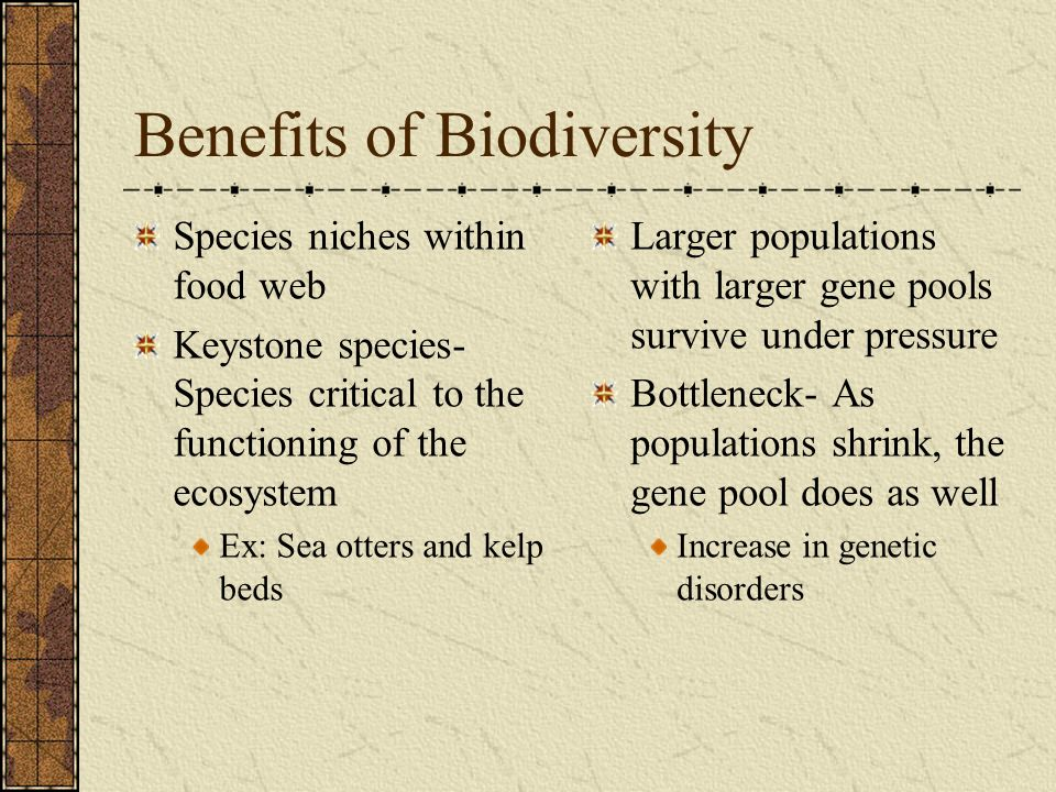 Benefits of Biodiversity Species niches within food web Keystone species- Species critical to the functioning of the ecosystem Ex: Sea otters and kelp