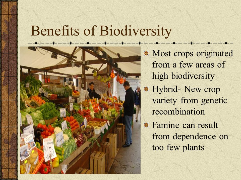 Benefits of Biodiversity Most crops originated from a few areas of high biodiversity Hybrid- New crop variety from genetic recombination Famine can re