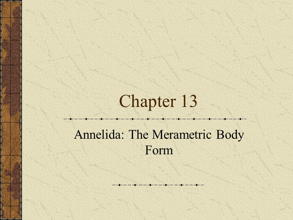 Chapter 13 Annelida: The Merametric Body Form