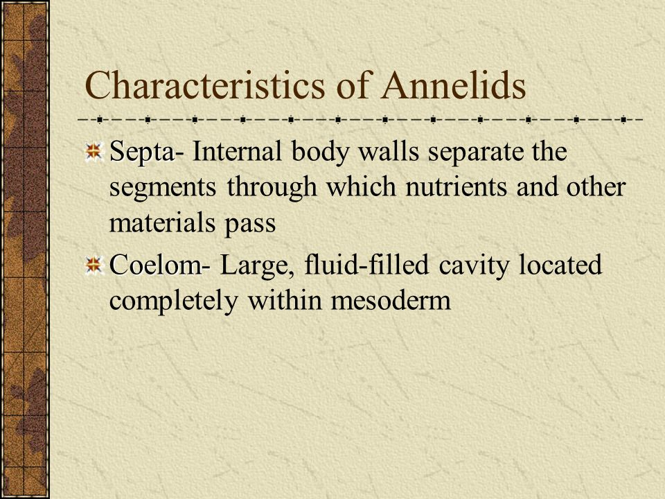 Characteristics of Annelids Septa Septa- Internal body walls separate the segments through which nutrients and other materials pass Coelom- Coelom- La