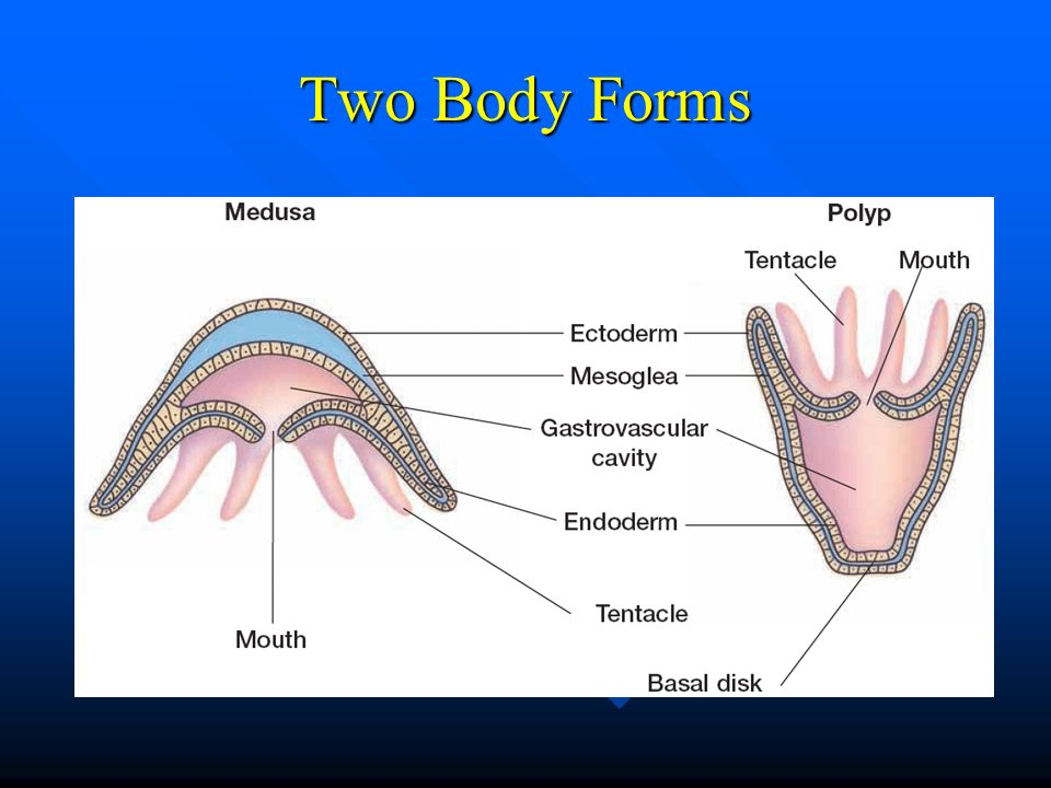 Two Body Forms