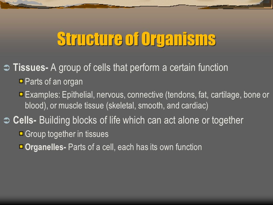 Structure of Organisms Tissues- A group of cells that perform a certain function Parts of an organ Examples: Epithelial, nervous, connective (tendons, fat, cartilage, bone or blood), or muscle tissue (skeletal, smooth, and cardiac) Cells- Building blocks of life which can act alone or together Group together in tissues Organelles- Parts of a cell, each has its own function
