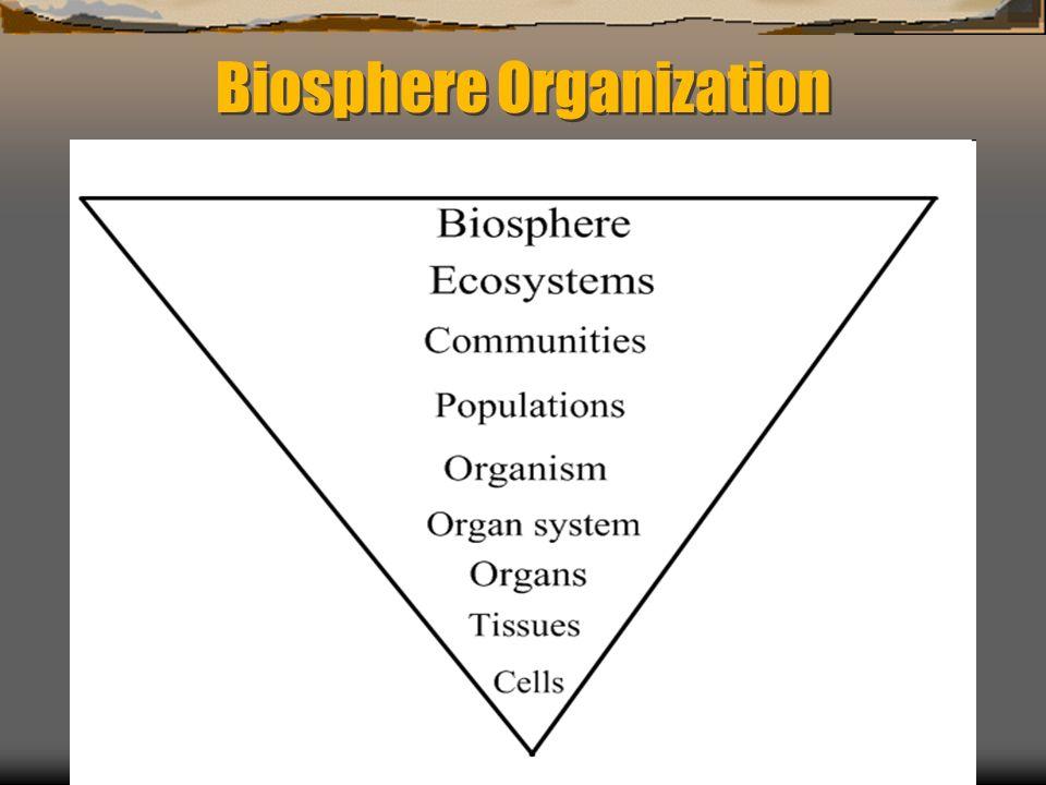 Biosphere Organization