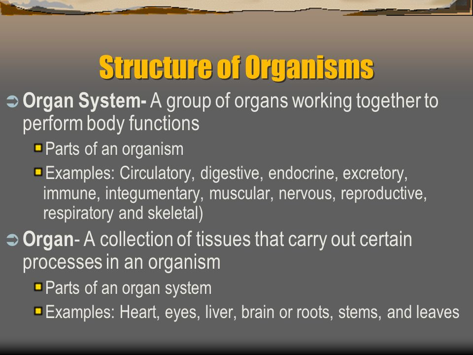 Structure of Organisms Organ System- A group of organs working together to perform body functions Parts of an organism Examples: Circulatory, digestive, endocrine, excretory, immune, integumentary, muscular, nervous, reproductive, respiratory and skeletal) Organ - A collection of tissues that carry out certain processes in an organism Parts of an organ system Examples: Heart, eyes, liver, brain or roots, stems, and leaves