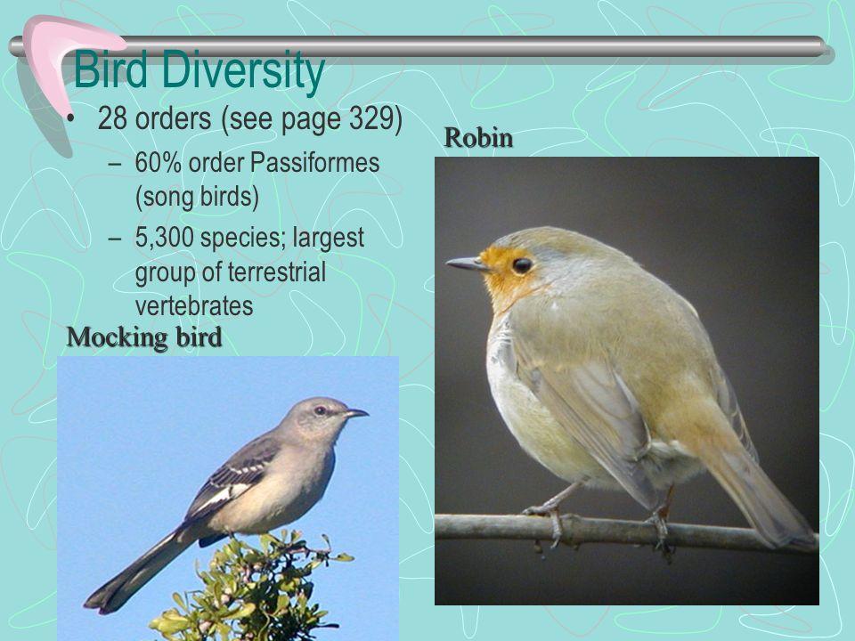 Bird Diversity 28 orders (see page 329) –60% order Passiformes (song birds) –5,300 species; largest group of terrestrial vertebrates Robin Mocking bir