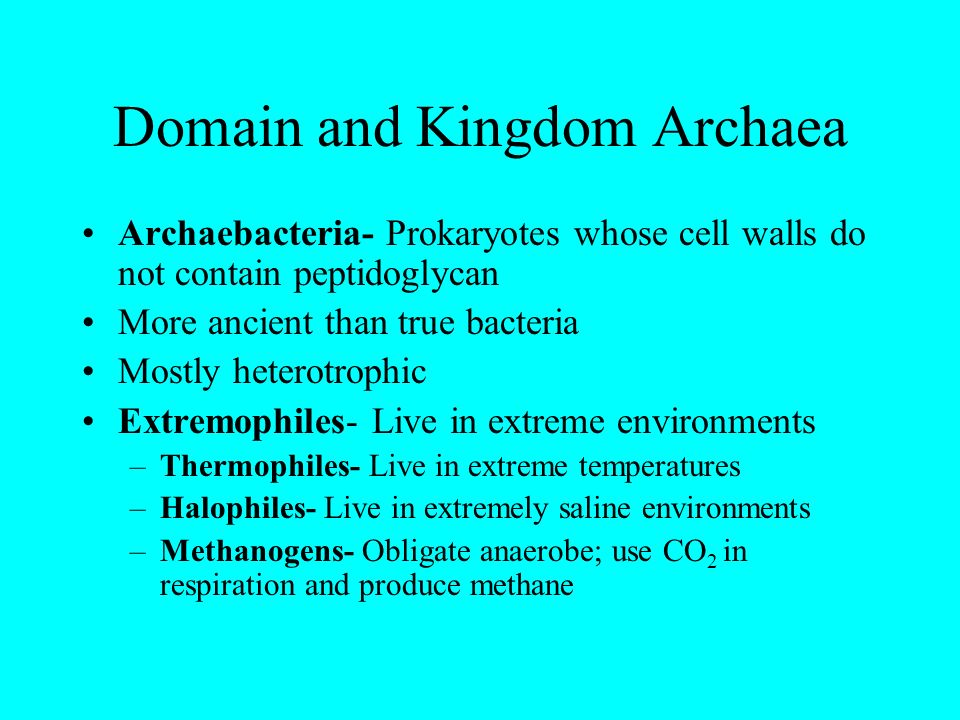 Domain and Kingdom Archaea Archaebacteria- Prokaryotes whose cell walls do not contain peptidoglycan More ancient than true bacteria Mostly heterotrop