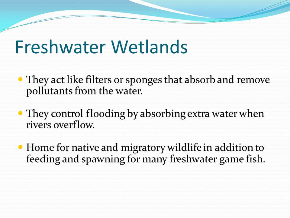 They act like filters or sponges that absorb and remove pollutants from the water. They control flooding by absorbing extra water when rivers overflow