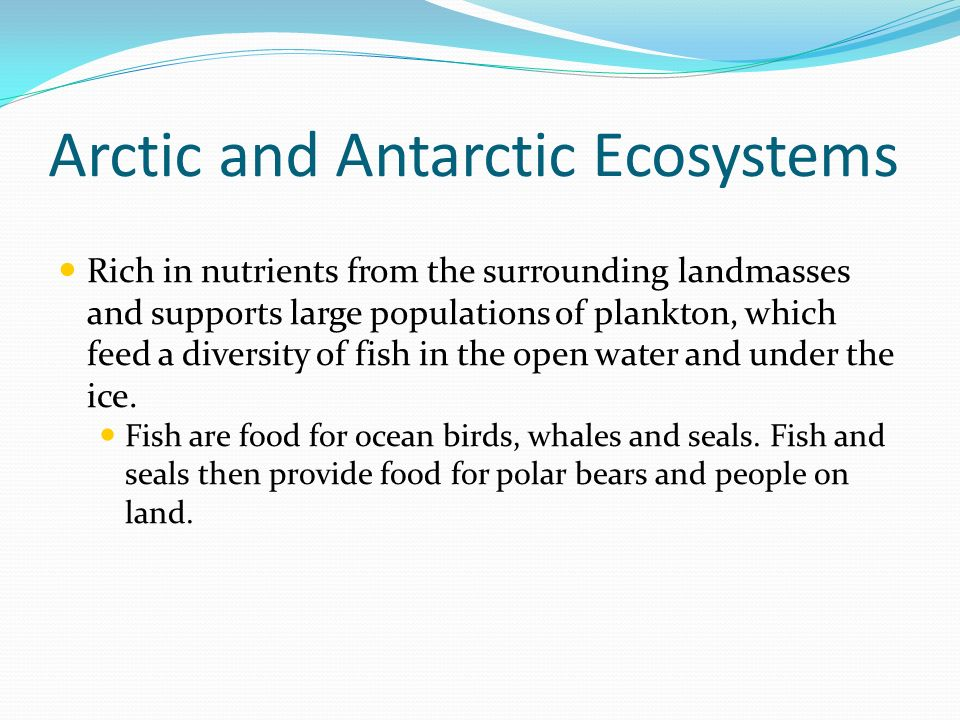 Arctic and Antarctic Ecosystems Rich in nutrients from the surrounding landmasses and supports large populations of plankton, which feed a diversity o