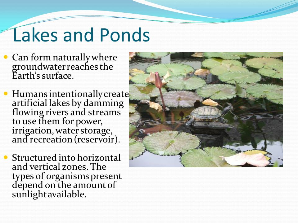 Lakes and Ponds Can form naturally where groundwater reaches the Earths surface. Humans intentionally create artificial lakes by damming flowing river