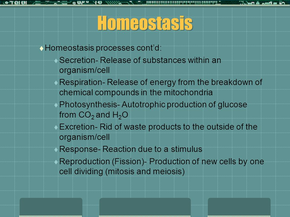 Homeostasis Homeostasis processes contd: Secretion- Release of substances within an organism/cell Respiration- Release of energy from the breakdown of