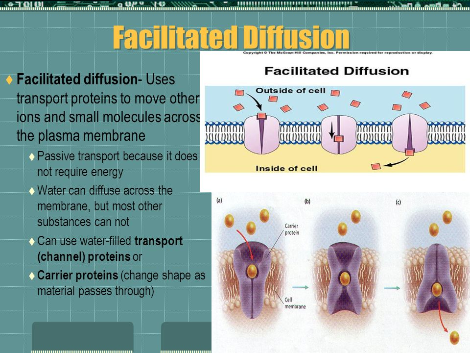 Facilitated Diffusion Facilitated diffusion - Uses transport proteins to move other ions and small molecules across the plasma membrane Passive transp