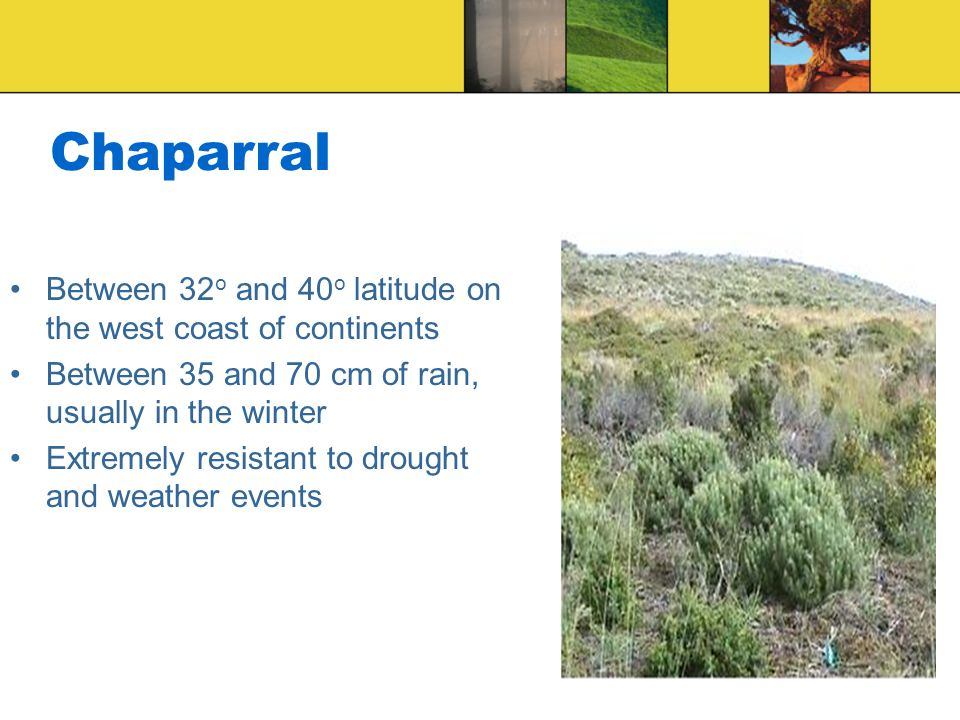 Chaparral Between 32 o and 40 o latitude on the west coast of continents Between 35 and 70 cm of rain, usually in the winter Extremely resistant to dr
