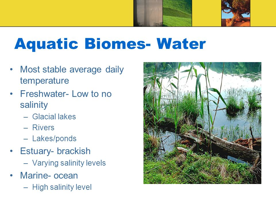 Aquatic Biomes- Water Most stable average daily temperature Freshwater- Low to no salinity –Glacial lakes –Rivers –Lakes/ponds Estuary- brackish –Vary
