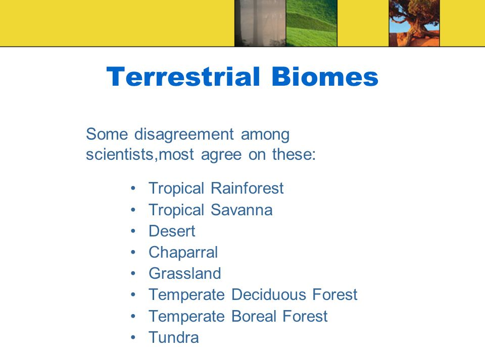 Terrestrial Biomes Tropical Rainforest Tropical Savanna Desert Chaparral Grassland Temperate Deciduous Forest Temperate Boreal Forest Tundra Some disa
