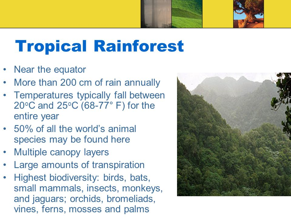Tropical Rainforest Near the equator More than 200 cm of rain annually Temperatures typically fall between 20 o C and 25 o C (68-77° F) for the entire