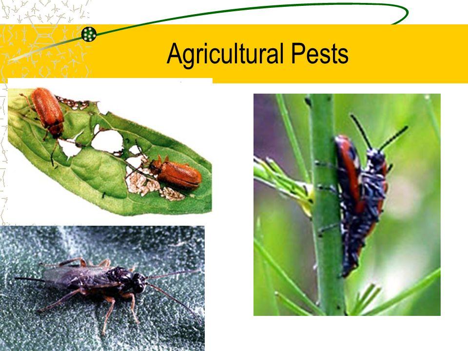 Agricultural Pests