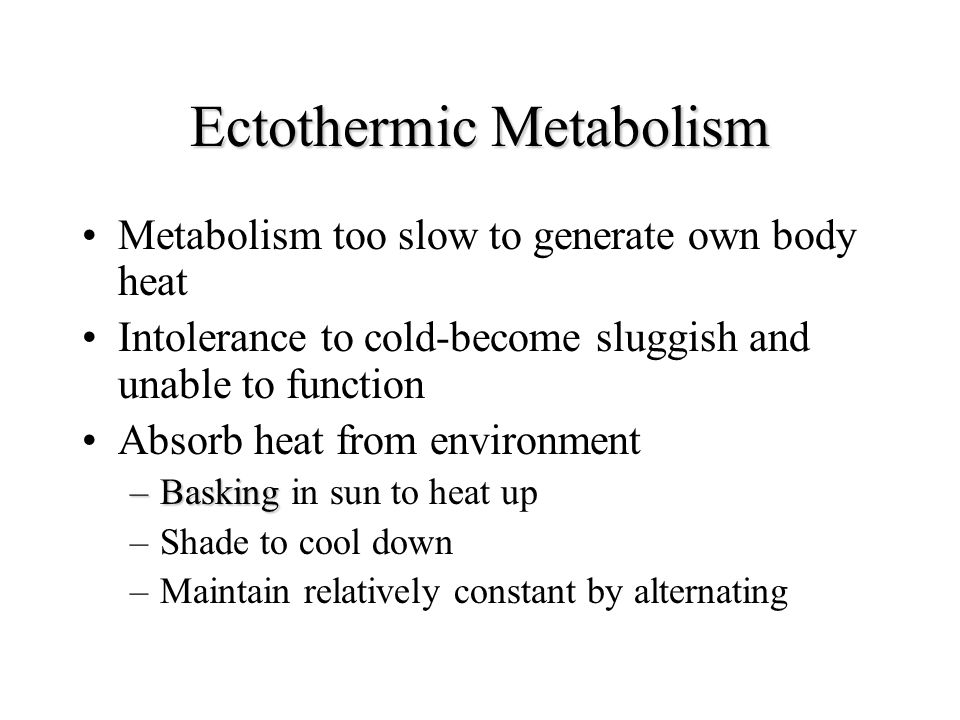 Ectothermic Metabolism Metabolism too slow to generate own body heat Intolerance to cold-become sluggish and unable to function Absorb heat from envir