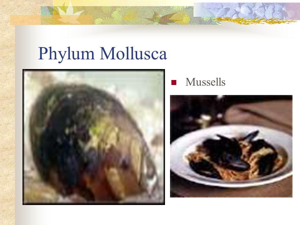 Phylum Mollusca Mussells