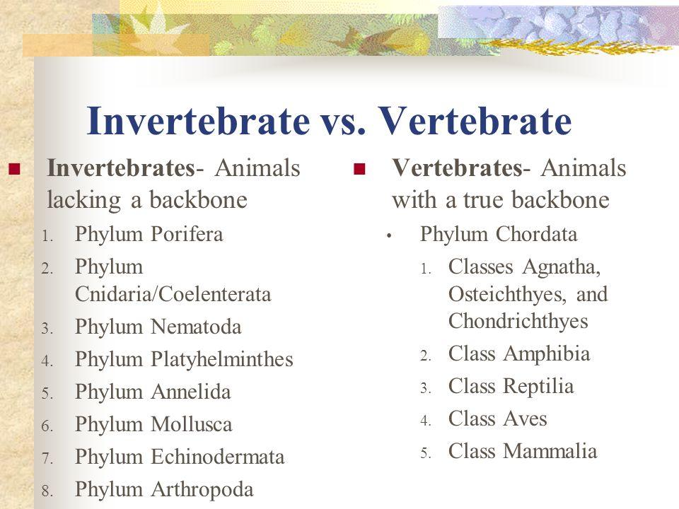 Invertebrate vs. Vertebrate Invertebrates- Animals lacking a backbone 1. Phylum Porifera 2. Phylum Cnidaria/Coelenterata 3. Phylum Nematoda 4. Phylum