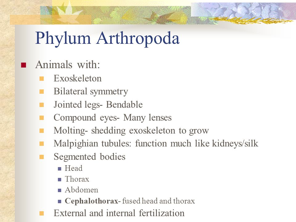 Phylum Arthropoda Animals with: Exoskeleton Bilateral symmetry Jointed legs- Bendable Compound eyes- Many lenses Molting- shedding exoskeleton to grow