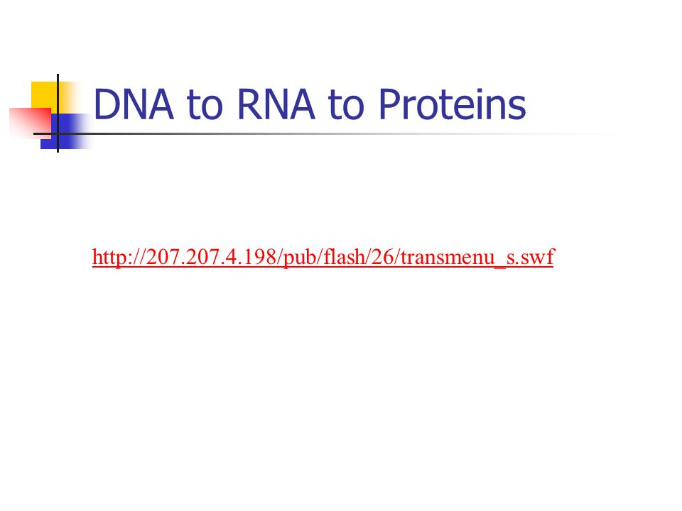 DNA to RNA to Proteins http://207.207.4.198/pub/flash/26/transmenu_s.swf