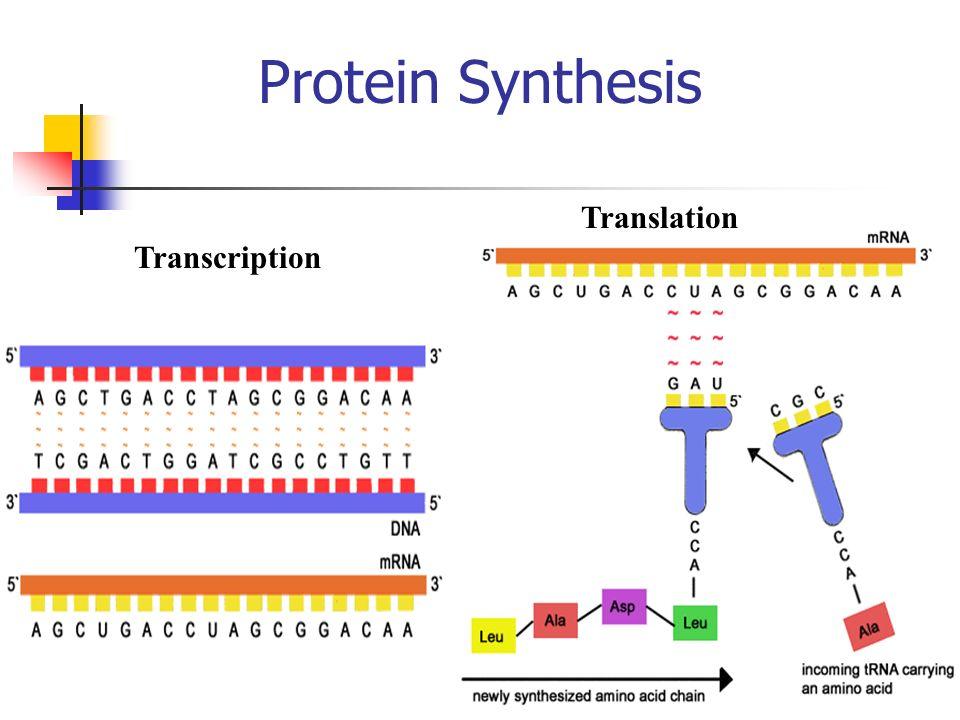 DNA to RNA to Proteins http://207.207.4.198/pub/flash/26/transmenu_s.swf