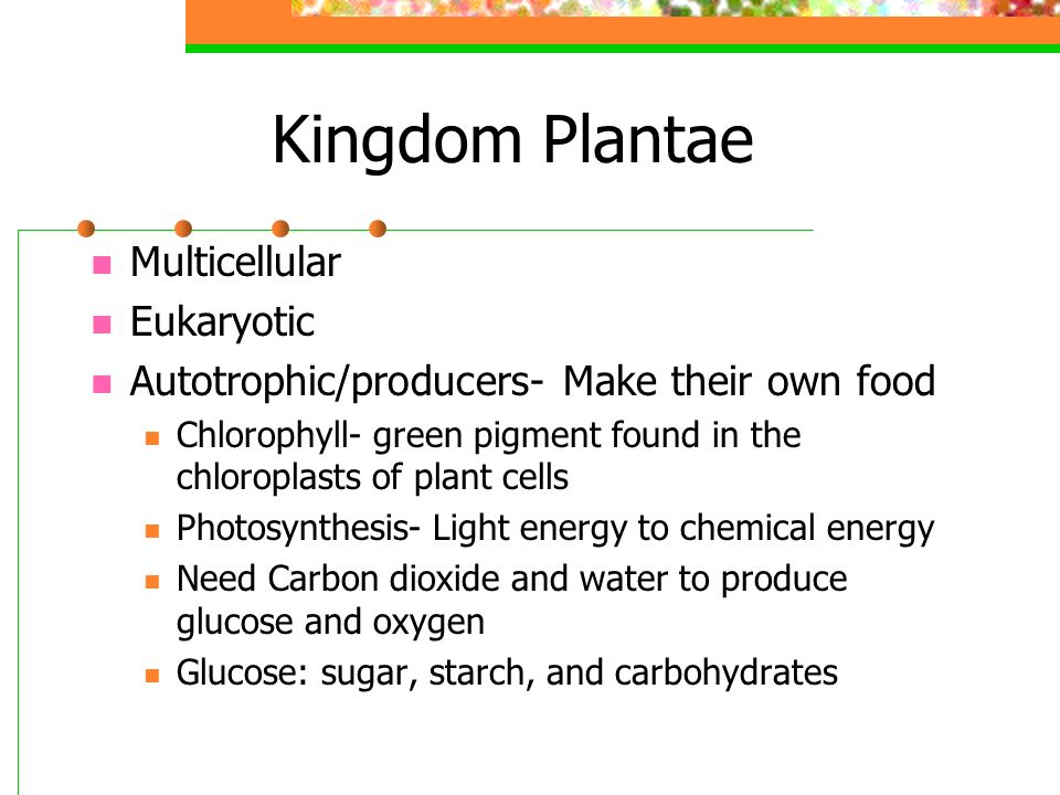 Kingdom Plantae Multicellular Eukaryotic Autotrophic/producers- Make their own food Chlorophyll- green pigment found in the chloroplasts of plant cells Photosynthesis- Light energy to chemical energy Need Carbon dioxide and water to produce glucose and oxygen Glucose: sugar, starch, and carbohydrates