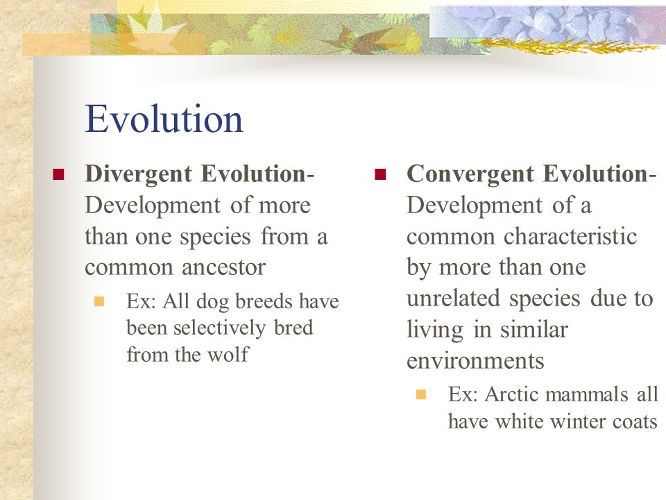 Evolution Divergent Evolution- Development of more than one species from a common ancestor Ex: All dog breeds have been selectively bred from the wolf