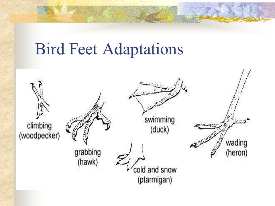 Bird Feet Adaptations