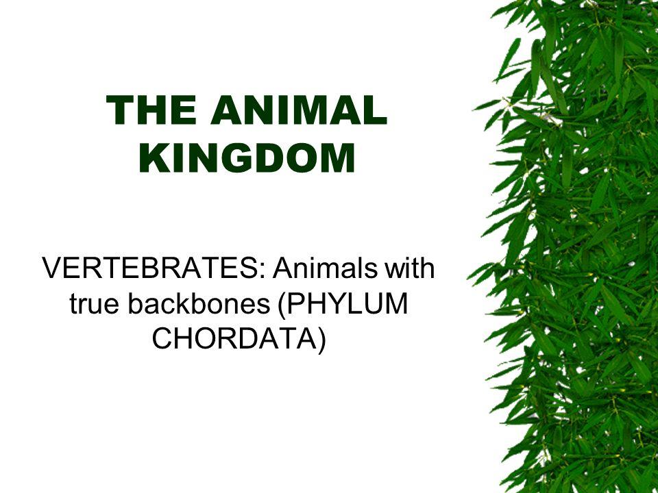 THE ANIMAL KINGDOM VERTEBRATES: Animals with true backbones (PHYLUM CHORDATA)