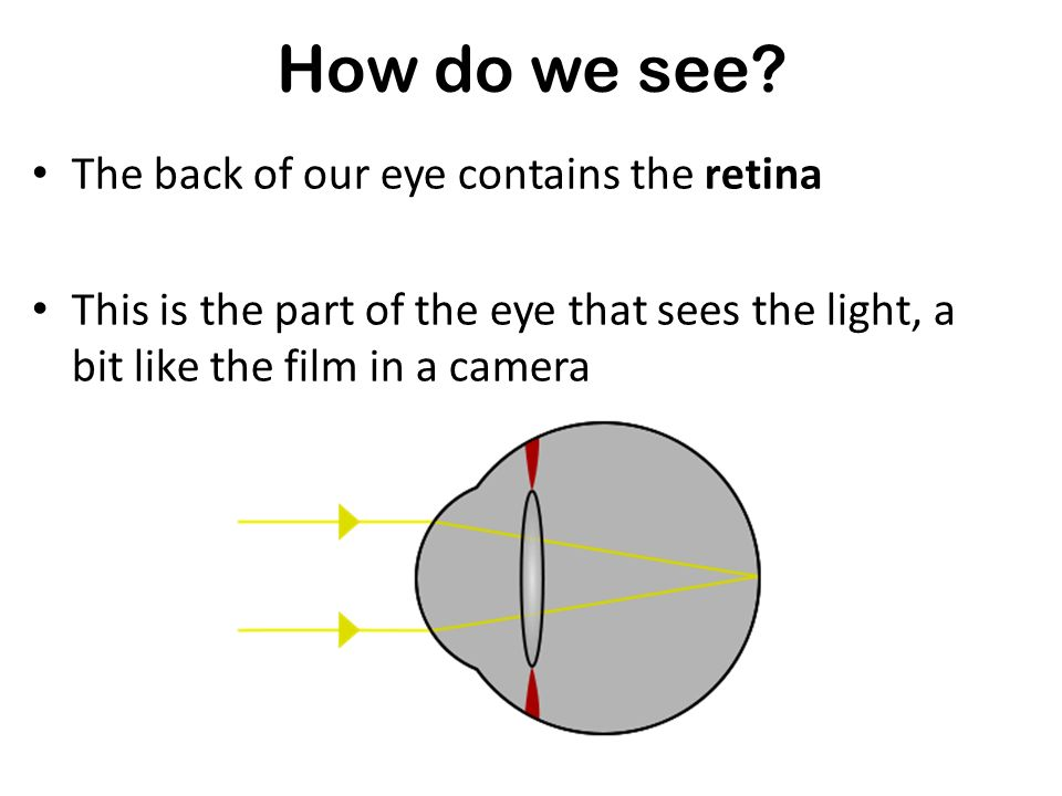 Our eyes contain a lens The job of the lens is to bring together (or focus) light to the back of our eye How do we see? Did you know...? The front of