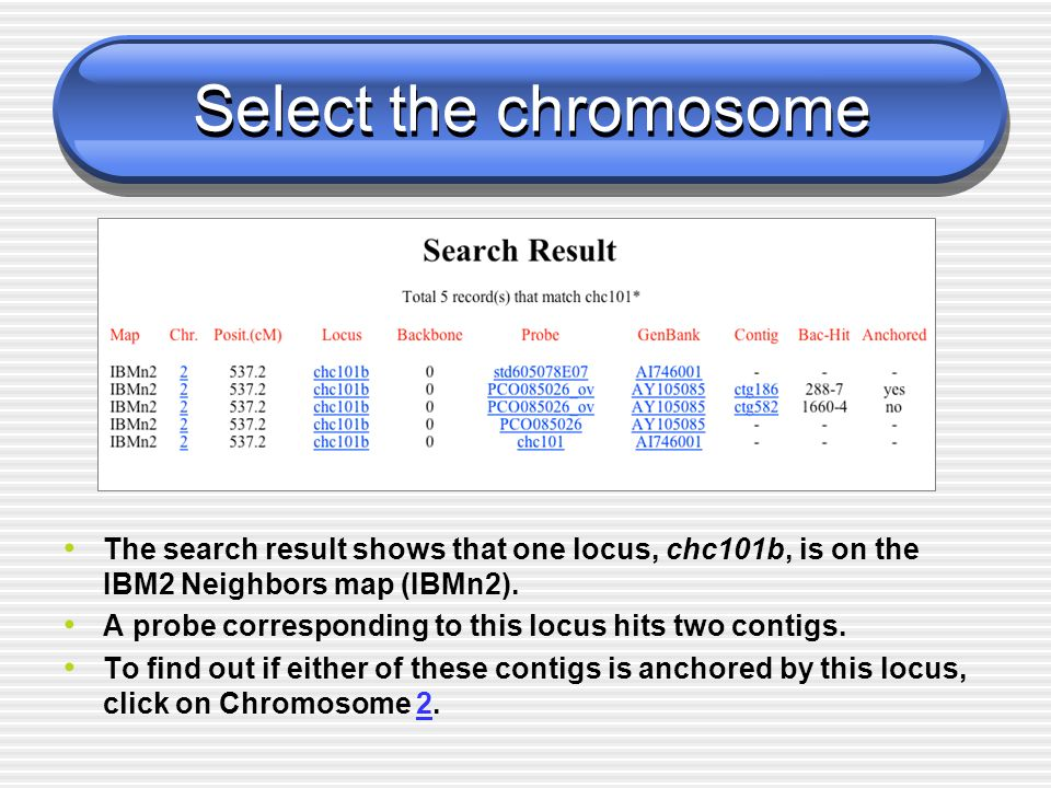 Select the chromosome The search result shows that one locus, chc101b, is on the IBM2 Neighbors map (IBMn2). A probe corresponding to this locus hits