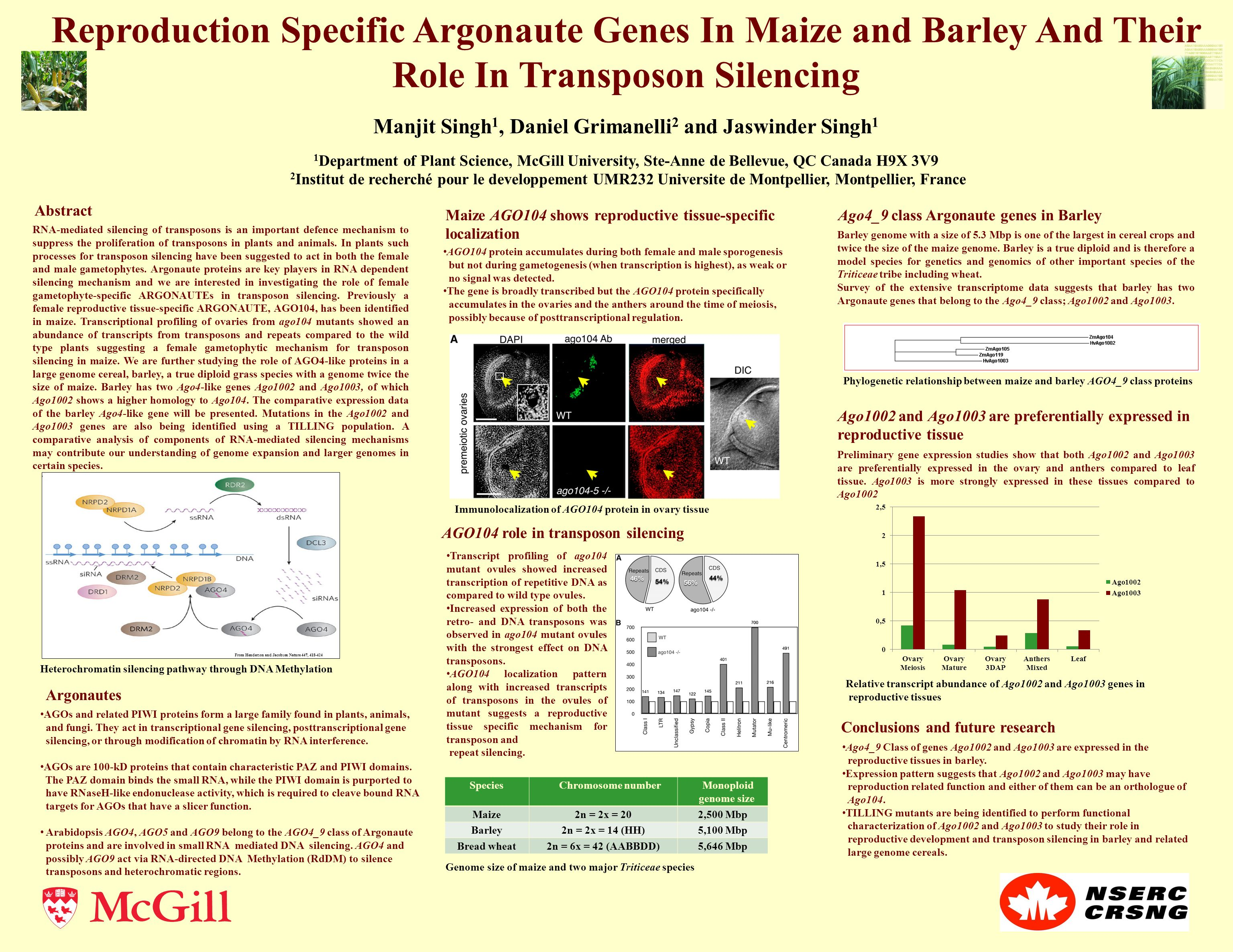 Reproduction Specific Argonaute Genes In Maize and Barley And Their Role In Transposon Silencing Manjit Singh 1, Daniel Grimanelli 2 and Jaswinder Singh 1 1 Department of Plant Science, McGill University, Ste-Anne de Bellevue, QC Canada H9X 3V9 2 Institut de recherché pour le developpement UMR232 Universite de Montpellier, Montpellier, France From Henderson and Jacobson Nature 447, 418-424 Species Chromosome number Monoploid genome size Maize2n = 2x = 202,500 Mbp Barley2n = 2x = 14 (HH)5,100 Mbp Bread wheat2n = 6x = 42 (AABBDD)5,646 Mbp AGO104 role in transposon silencing Transcript profiling of ago104 mutant ovules showed increased transcription of repetitive DNA as compared to wild type ovules.