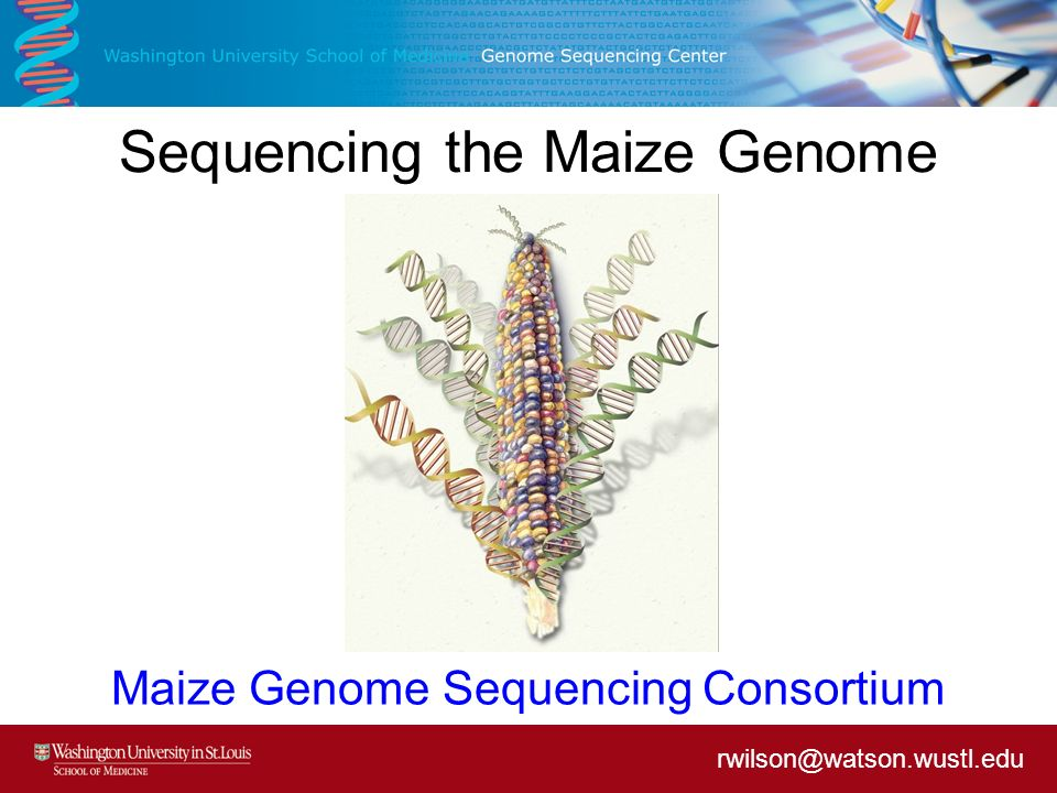 Sequencing the Maize Genome Maize Genome Sequencing Consortium