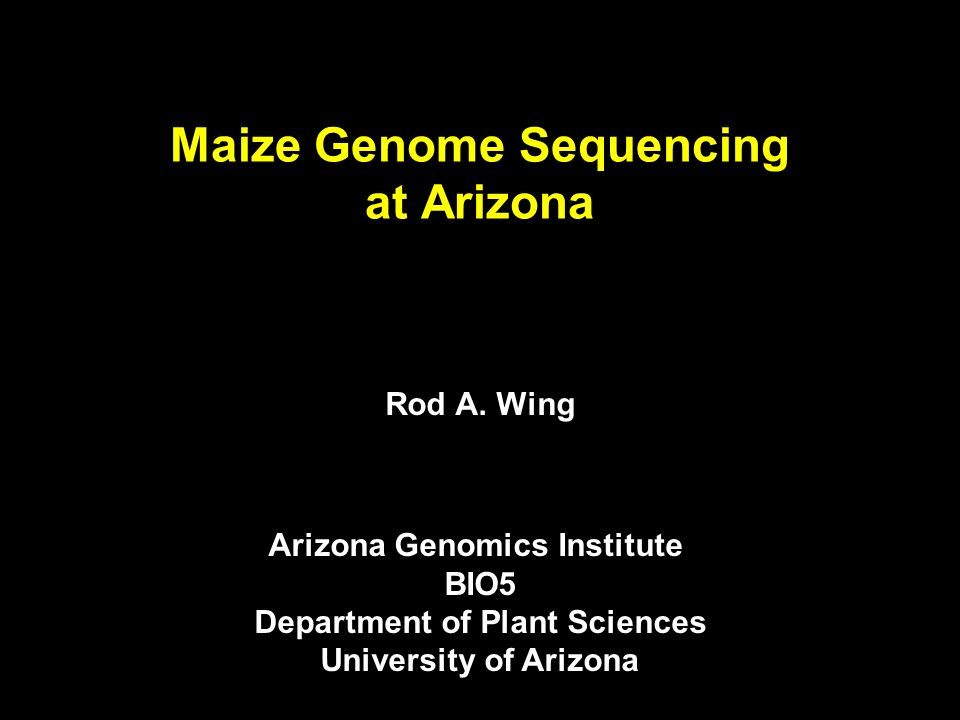 BAC by BAC Strategy to Sequence the Maize Genome Maize B73 Genome (2300 Mb) BAC library construction (Hind III, EcoR I, MboI ; 27X genome coverage (~150kb inserts) BAC End Sequencing ~800,000 Genetic Anchoring in silico, overgo hybridization (19,292) Fingerprinting ~460,000 BACs STC database BAC physical maps (HICF & Agarose) FPC databases (Agarose and HICF) Choose a seed BAC (800 Kb spacing) Shotgun sequencing and finishing STC database search, FP comparison Determine minimum overlap BACs Complete maize genome sequence Framework