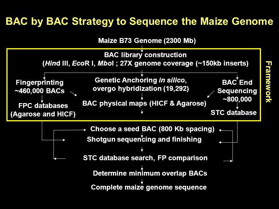 10 20 30 40 50 60 70 80 90 100 Percentage Chromosomes 12345678910 Estimated Chromosomal Coverage The chromosomal coverage based on maize cv Seneca 60 Physical Genetic