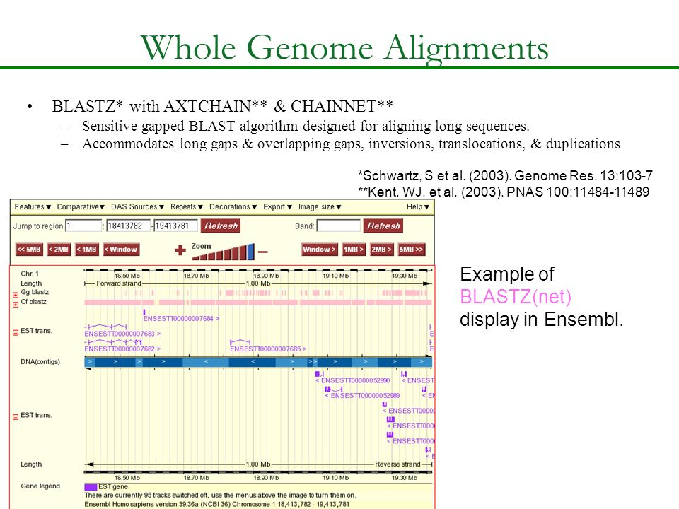 Whole Genome Alignments BLASTZ* with AXTCHAIN** & CHAINNET** –Sensitive gapped BLAST algorithm designed for aligning long sequences. –Accommodates lon