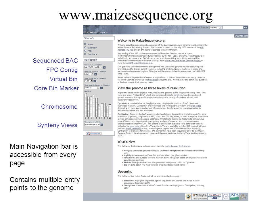 www.maizesequence.org Sequenced BAC FPC Contig Virtual Bin Core Bin Marker Chromosome Synteny Views Main Navigation bar is accessible from every page
