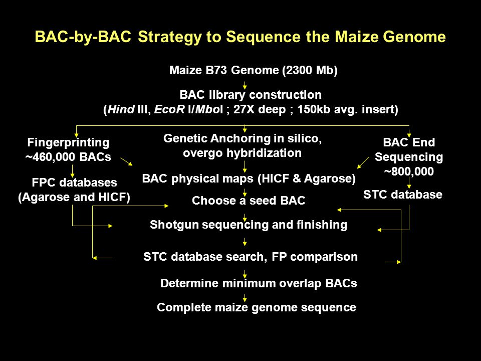 BAC-by-BAC Strategy to Sequence the Maize Genome Maize B73 Genome (2300 Mb) BAC library construction (Hind III, EcoR I/MboI ; 27X deep ; 150kb avg. in