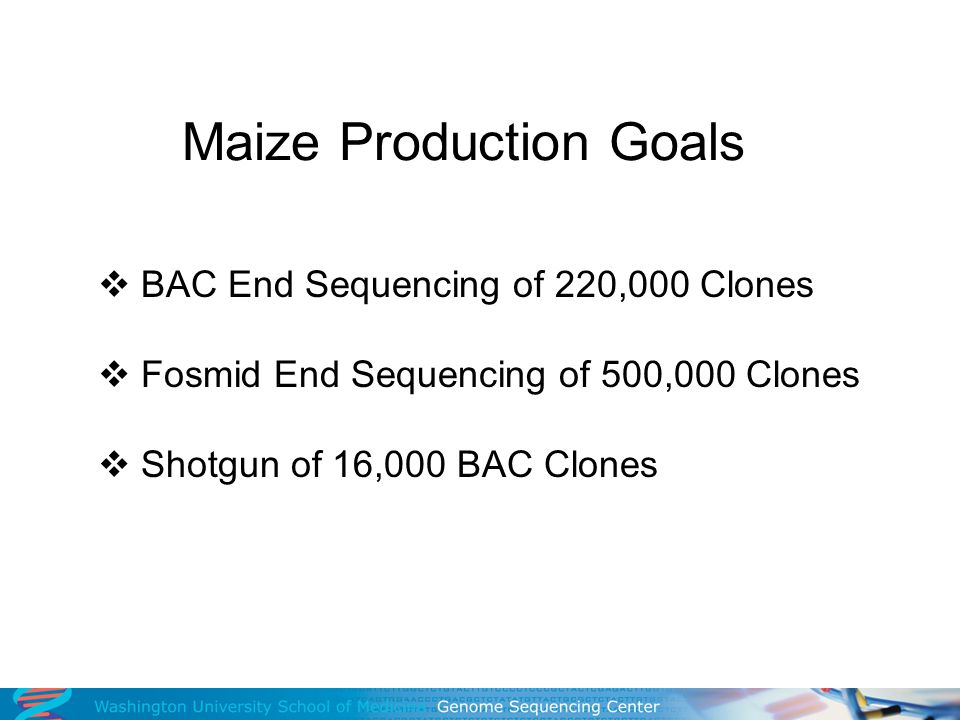 Maize Production Goals BAC End Sequencing of 220,000 Clones Fosmid End Sequencing of 500,000 Clones Shotgun of 16,000 BAC Clones