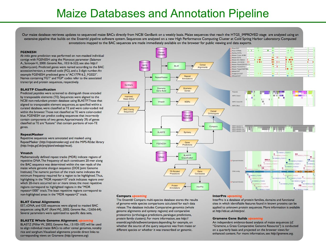 Maize Databases and Annotation Pipeline
