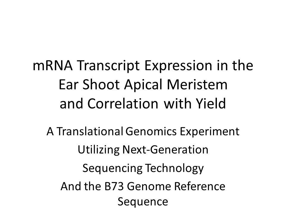 mRNA Transcript Expression in the Ear Shoot Apical Meristem and Correlation with Yield A Translational Genomics Experiment Utilizing Next-Generation Sequencing Technology And the B73 Genome Reference Sequence