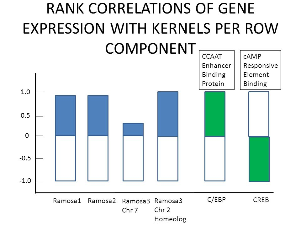 RANK CORRELATIONS OF GENE EXPRESSION WITH KERNELS PER ROW COMPONENT 1.0 0.5 0 -0.5 Ramosa1 Ramosa2 Ramosa3 Chr 7 Ramosa3 Chr 2 Homeolog C/EBP CREB CCAAT Enhancer Binding Protein cAMP Responsive Element Binding