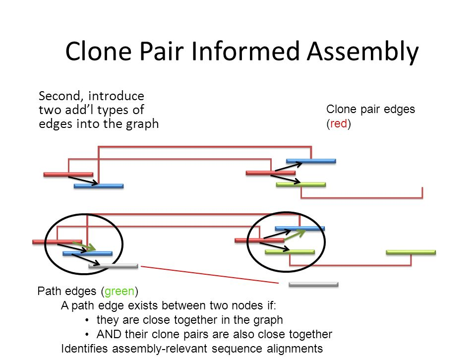 Clone Pair Informed Assembly Second, introduce two addl types of edges into the graph Clone pair edges (red) Path edges (green) A path edge exists between two nodes if: they are close together in the graph AND their clone pairs are also close together Identifies assembly-relevant sequence alignments