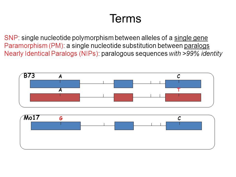 Paramorphisms Provide Evidence of NIPs