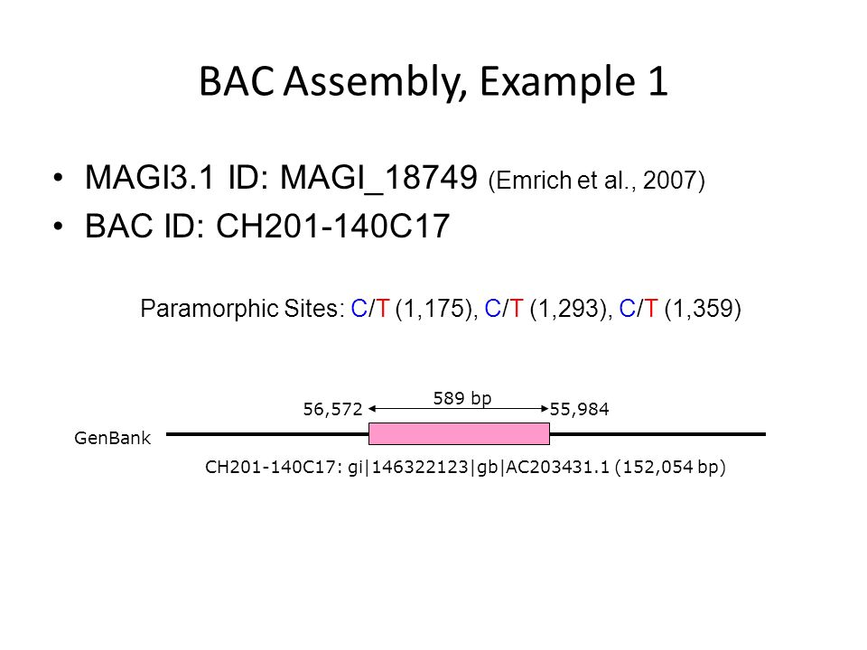 BAC Assembly Example 1 - Site #1 BAC ID: CH201-140C17 GI: 146322123 GB: AC203431.1 152,054 bp MAGI_18749 Paramorphic Site #1: C/T (1,175) 2 C vs 2 T Consensus Base Paramorphic Site #1 2/7 assembled BACs known to contain NIPs exhibit evidence of NIP collapse (conservative)