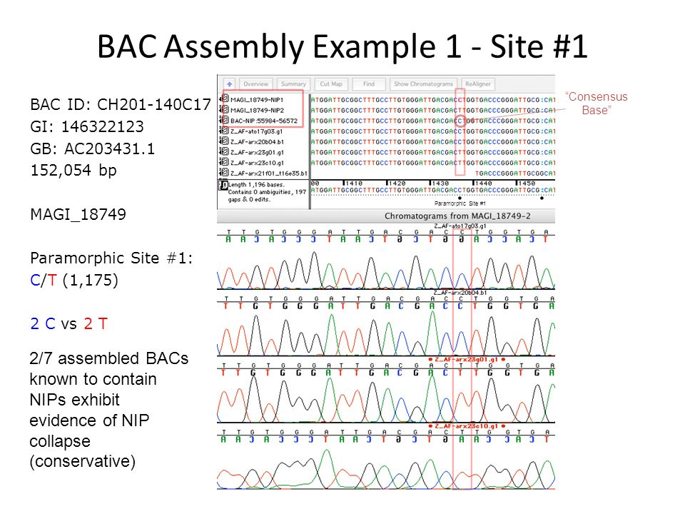 Traditional Assembly Sequence alignments between reads are identified Construct contigs – Start at a good alignment – Extend ends of contig one sequence at a time Clone pair information is used to scaffold contigs after contig construction.
